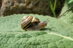 snail-1378482_1280